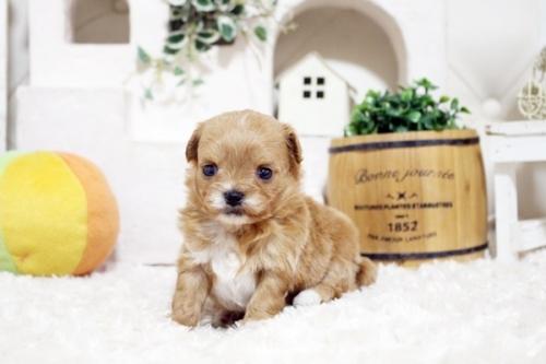 ミックスの子犬(ID:1255411286)の4枚目の写真/更新日:2018-06-22