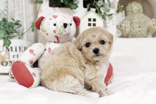 ミックスの子犬(ID:1255411676)の2枚目の写真/更新日:2017-06-19