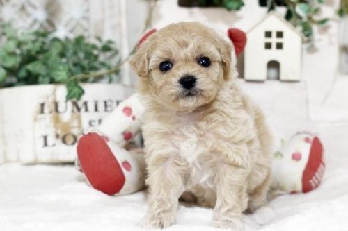 ミックスの子犬(ID:1255411676)の3枚目の写真/更新日:2017-06-19