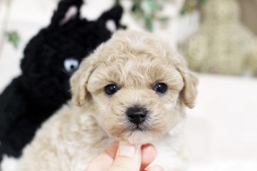 ミックスの子犬(ID:1255411677)の1枚目の写真/更新日:2017-06-19