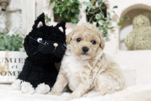 ミックスの子犬(ID:1255411677)の2枚目の写真/更新日:2017-06-19