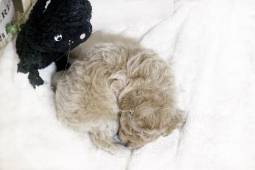 ミックスの子犬(ID:1255411677)の3枚目の写真/更新日:2018-06-22
