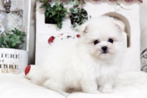 ミックスの子犬(ID:1255411680)の1枚目の写真/更新日:2019-02-08