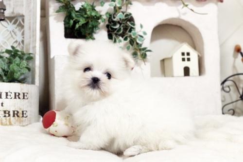 ミックスの子犬(ID:1255411680)の2枚目の写真/更新日:2017-06-26