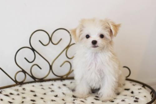 ミックスの子犬(ID:1255411681)の1枚目の写真/更新日:2017-06-26