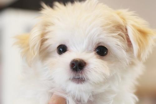 ミックスの子犬(ID:1255411681)の2枚目の写真/更新日:2017-06-26