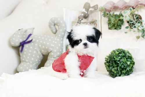 ミックスの子犬(ID:1255411682)の1枚目の写真/更新日:2017-06-26