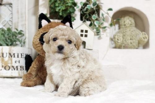 ミックスの子犬(ID:1255411683)の1枚目の写真/更新日:2018-06-22