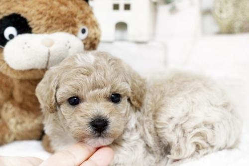 ミックスの子犬(ID:1255411683)の2枚目の写真/更新日:2017-06-26