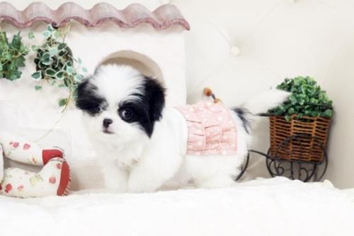 ミックスの子犬(ID:1255411715)の2枚目の写真/更新日:2017-08-03