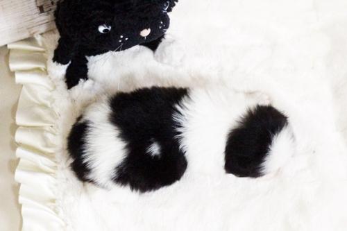 狆(チン)の子犬(ID:1255411721)の2枚目の写真/更新日:2017-08-03
