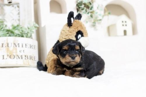 ミックスの子犬(ID:1255411857)の2枚目の写真/更新日:2017-12-22