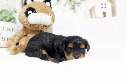 ミックスの子犬(ID:1255411857)の3枚目の写真/更新日:2017-12-22