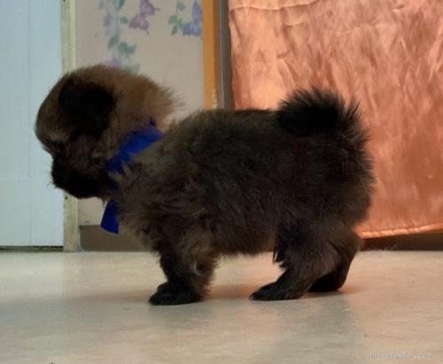 ミックスの子犬(ID:1255411945)の2枚目の写真/更新日:2018-04-03