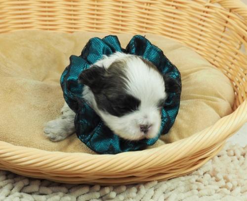 ミックスの子犬(ID:1255511404)の5枚目の写真/更新日:2021-03-18