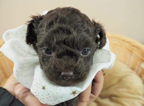 ミックスの子犬(ID:1255511405)の1枚目の写真/更新日:2021-02-25