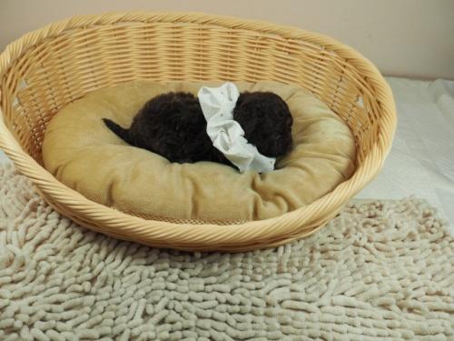 ミックスの子犬(ID:1255511405)の2枚目の写真/更新日:2021-02-25