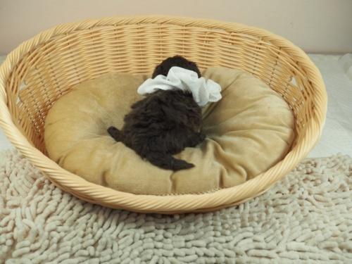 ミックスの子犬(ID:1255511405)の4枚目の写真/更新日:2021-02-25