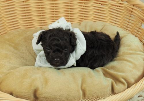 ミックスの子犬(ID:1255511405)の5枚目の写真/更新日:2021-02-25
