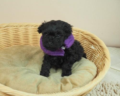 ミックスの子犬(ID:1255511421)の1枚目の写真/更新日:2020-07-01