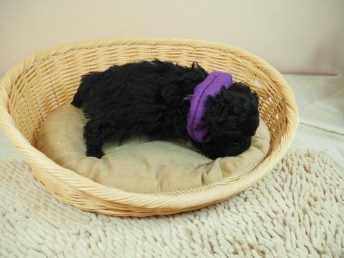 ミックスの子犬(ID:1255511421)の2枚目の写真/更新日:2020-07-01