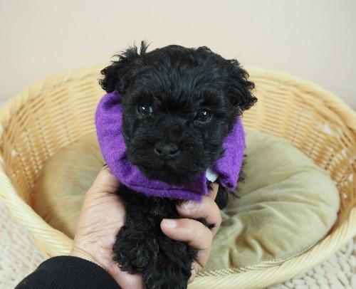 ミックスの子犬(ID:1255511421)の5枚目の写真/更新日:2020-07-01