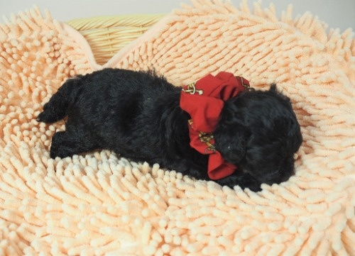 ミックスの子犬(ID:1255511422)の2枚目の写真/更新日:2020-07-01
