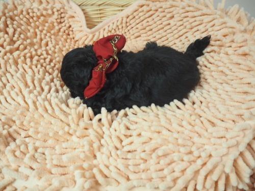 ミックスの子犬(ID:1255511422)の3枚目の写真/更新日:2020-07-01