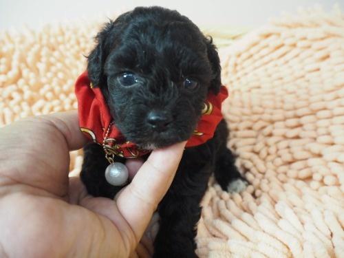ミックスの子犬(ID:1255511422)の5枚目の写真/更新日:2020-07-01