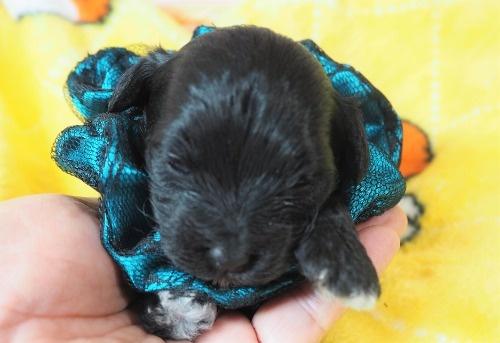 ミックスの子犬(ID:1255511423)の1枚目の写真/更新日:2020-07-01