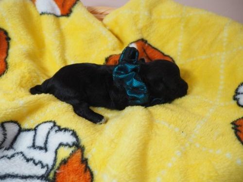 ミックスの子犬(ID:1255511423)の2枚目の写真/更新日:2020-07-01