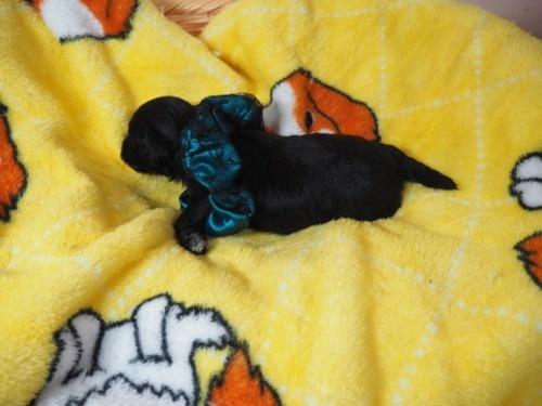 ミックスの子犬(ID:1255511423)の3枚目の写真/更新日:2020-07-01