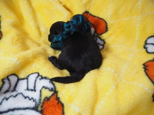 ミックスの子犬(ID:1255511423)の4枚目の写真/更新日:2020-07-01
