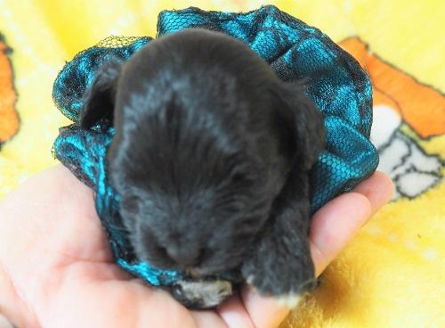 ミックスの子犬(ID:1255511423)の5枚目の写真/更新日:2020-07-01
