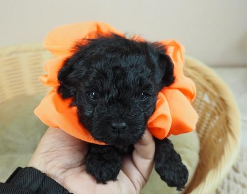 ミックスの子犬(ID:1255511425)の1枚目の写真/更新日:2020-07-01