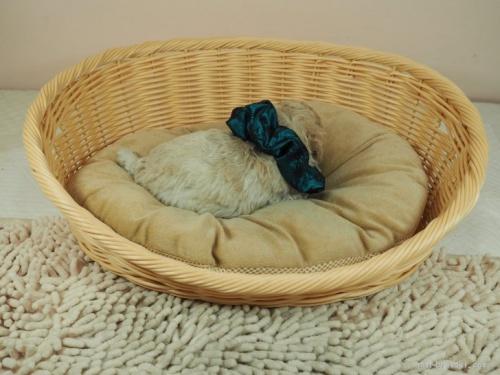 トイプードルの子犬(ID:1255511438)の2枚目の写真/更新日:2020-07-31