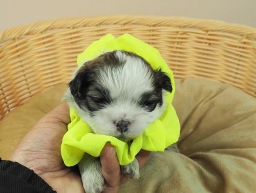 ミックスの子犬(ID:1255511441)の1枚目の写真/更新日:2021-03-18