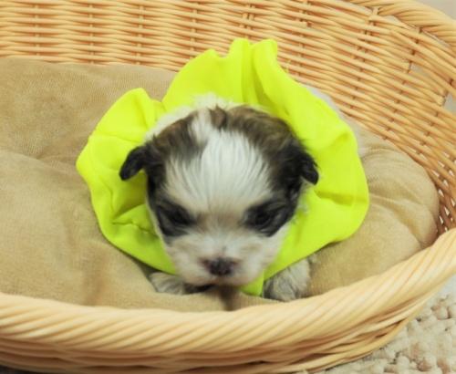 ミックスの子犬(ID:1255511441)の5枚目の写真/更新日:2021-03-18