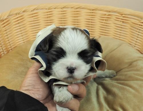ミックスの子犬(ID:1255511443)の1枚目の写真/更新日:2021-03-18