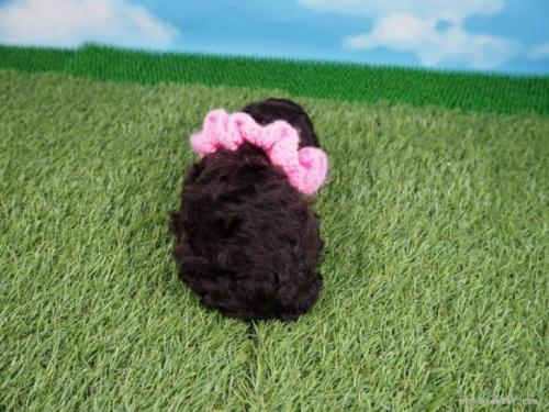 トイプードルの子犬(ID:1255511455)の4枚目の写真/更新日:2021-02-25