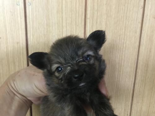 ミックスの子犬(ID:1257411069)の1枚目の写真/更新日:2017-08-04