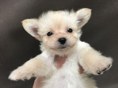 ミックスの子犬(ID:1257411084)の1枚目の写真/更新日:2017-08-14