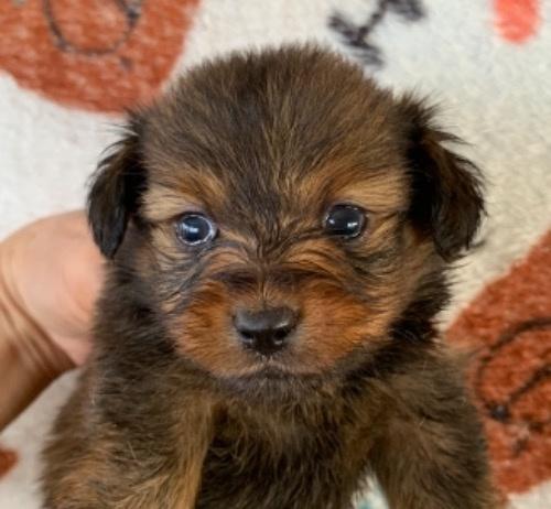ミックスの子犬(ID:1257411191)の1枚目の写真/更新日:2021-03-15
