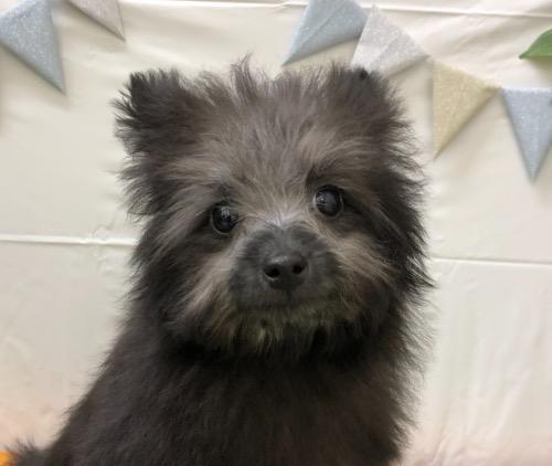 ミックスの子犬(ID:1257411204)の1枚目の写真/更新日:2021-05-12