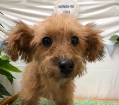 ミックスの子犬(ID:1257411205)の1枚目の写真/更新日:2021-05-12