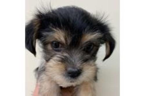 ミックスの子犬(ID:1257411212)の1枚目の写真/更新日:2021-05-29