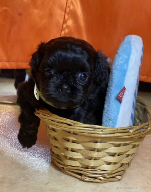 ミックスの子犬(ID:1258111111)の3枚目の写真/更新日:2020-09-06