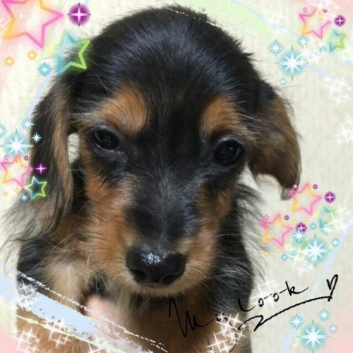 ミックスの子犬(ID:1259911002)の1枚目の写真/更新日:2015-12-16