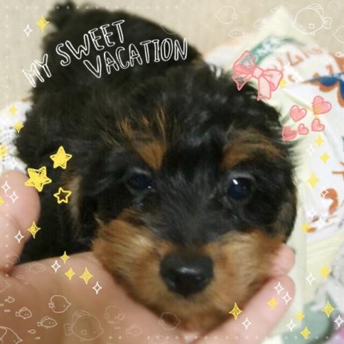 ミックスの子犬(ID:1259911004)の1枚目の写真/更新日:2015-12-16