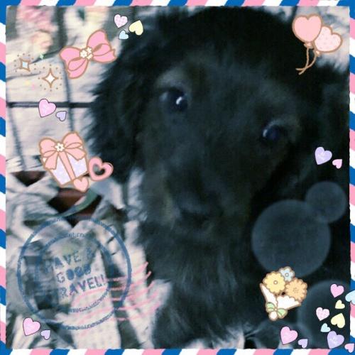 ミックスの子犬(ID:1259911005)の1枚目の写真/更新日:2015-12-16
